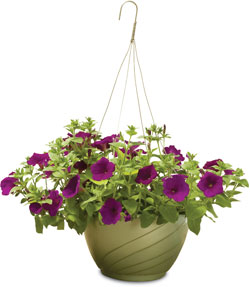 Hanging baskets featuring patented reservoir and drainage system.